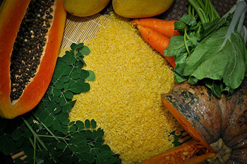 Golden-Rice_5.jpg / Flickr