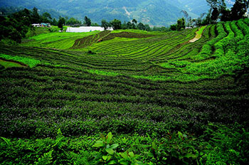 Siikim_step_farming.jpg / Flickr
