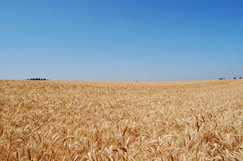 US-Wheatfield.jpg / Flickr