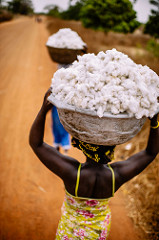 cotton_harvest_s.jpg / Flickr