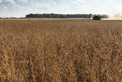 high-oleic-soybean.jpg / Flickr