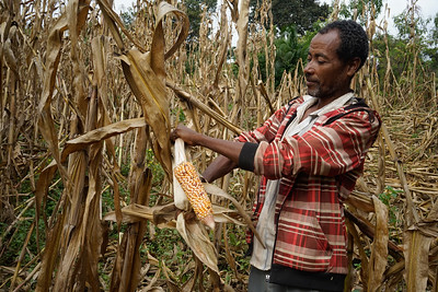 local_corn_ethiopia-1.jpg / Flickr