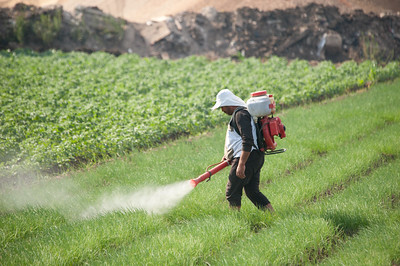 pesticide_spray_egypt-1.jpg / Flickr