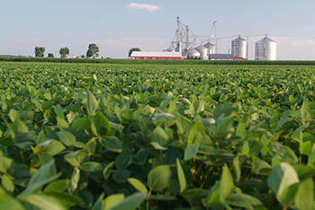 soybean-field.jpg / Flickr