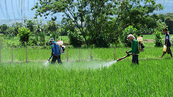 spraying-toxic-pesticides.jpg / Flickr