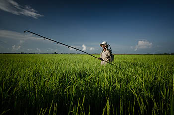 spraying_rice.jpg / Flickr