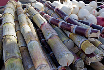 sugar_cane.jpg / Flickr