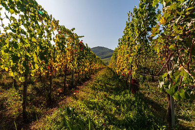 vignes_alsaciennes.jpg / Flickr