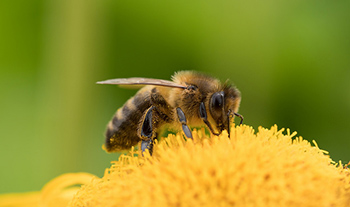 visit-bee-UK.jpg / Flickr